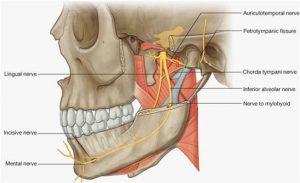 auriculotemporal-nerve